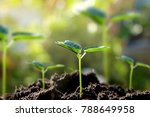 Small photo of In selective young plants growing on fertile soil with nurture bokeh background.
