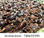 many cockroaches die make to... | Shutterstock . vector #788659390