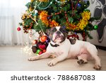 french bulldog dog lying under...   Shutterstock . vector #788687083