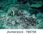 underwater scenery | Shutterstock . vector #788708
