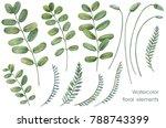 botanical illustrations. floral ... | Shutterstock . vector #788743399
