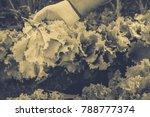 gardening  weeding weeds....   Shutterstock . vector #788777374