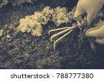 gardening  weeding weeds....   Shutterstock . vector #788777380