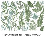 botanical hand drawn... | Shutterstock .eps vector #788779930
