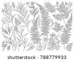 botanical hand drawn... | Shutterstock .eps vector #788779933