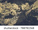 gardening  weeding weeds....   Shutterstock . vector #788781568