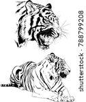 vector drawings sketches... | Shutterstock .eps vector #788799208
