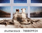 dog and cat under a plaid... | Shutterstock . vector #788809924