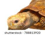 high resolution close up macro... | Shutterstock . vector #788813920