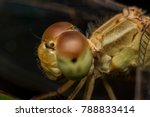 Macro Picture Of Dragonfly On...