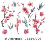 set of watercolor spring nature ... | Shutterstock . vector #788847709