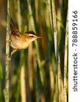 cute bird. green nature... | Shutterstock . vector #788859166