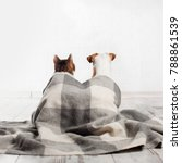 Stock photo dog and cat under a plaid pets sitting with their backs 788861539