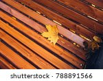 a fallen yellow maple leaf on a ... | Shutterstock . vector #788891566