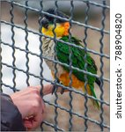 Small photo of Hand parrots are often found in zoos and at home. These birds attract a magnificent coloring, but are especially interesting for their ability to imitate human speech. Ara parrot.