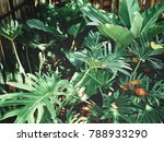 beautiful of fern tropical... | Shutterstock . vector #788933290