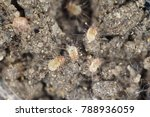 a magnification of dust mites | Shutterstock . vector #788936059