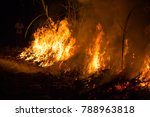 forest fire.dry leaf tree is... | Shutterstock . vector #788963818
