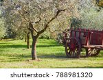 cart under the olive tree on a... | Shutterstock . vector #788981320
