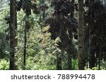 monarch butterflies hanging on... | Shutterstock . vector #788994478