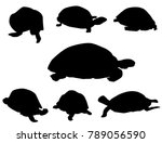 Stock vector tortoise set tortoise set is a different poses tortoise silhouette set it s a vector illustration 789056590