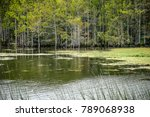 cypress strands in florida   Shutterstock . vector #789068938