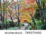 fall color of leafs | Shutterstock . vector #789075400