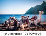 camels on the beach three pools ... | Shutterstock . vector #789094909