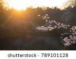 beautiful sunset with branch of ...   Shutterstock . vector #789101128