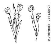 tulip flower illustration   Shutterstock . vector #789130924