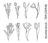 tulip flower illustration   Shutterstock . vector #789130948