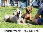 gower  wales  uk  august 2015 ... | Shutterstock . vector #789131428