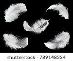 collection of white feathers... | Shutterstock . vector #789148234