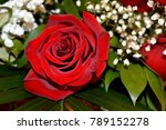 Stock photo beautiful red roses a combination of beauty and subtle naturalness 789152278