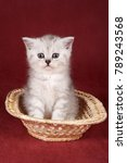 Stock photo white cute kitten on a red background 789243568