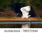 jabiru stork flight. jabiru ... | Shutterstock . vector #789272560