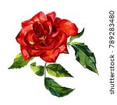 Stock photo rose painted watercolor 789283480