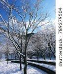 A Snowy Park