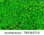 reindeer green moss wall... | Shutterstock . vector #789383713