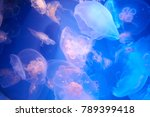 many translucent jellyfish or... | Shutterstock . vector #789399418