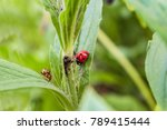 Red And Yellow Spotted Ladybug...