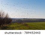 Flocks Of Birds Fly In The...