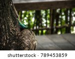 close up blue crested lizard... | Shutterstock . vector #789453859