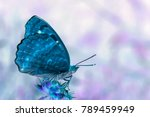 Stock photo invert effect applied on a photo of a butterfly 789459949