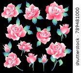 rose flower illustration  i... | Shutterstock .eps vector #789481000