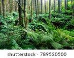 dense foliage in a subtropical... | Shutterstock . vector #789530500