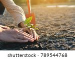 human hands planting little... | Shutterstock . vector #789544768