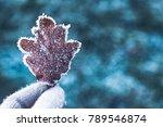 Beautiful Frozen Autumn Leaf I...