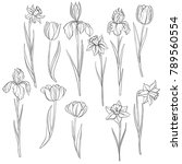 vector drawing flowers of... | Shutterstock .eps vector #789560554