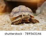 Stock photo close up baby african spurred tortoise resting in the garden slow life africa spurred tortoise 789563146